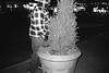 (brettstano) Tags: tmax 100 contax t3 peeing tree plant