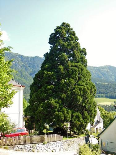 NÖ 2651 Reichenau an der Rax bei der Kirche