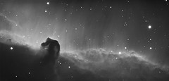 Horsehead Nebula (B33) in H-Alpha (CKemu) Tags: space deepspace dso astronomy astrophotography nebula bernard b33 horsehead halpha science sky night stars cosmos universe blackandwhite monochrome longexposure atik mono 414ex narrowband astrometrydotnet:id=nova1843907 astrometrydotnet:status=solved