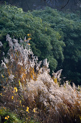 Schlossgarten Mnster Nov. 2016_50 (dcs 0104) Tags: schloss johann conrad schlaun westflischewilhelmsuniversitt universitt mnster nikon d3100 d800 nikkor 50 50mm 18 g 55300 55300mm 3556 vr flora baum strauch blatt arbre arbuste heester bush busch feuille leaf himmel sky ciel hemel botanischergarten garten garden jardin tuin herfst herbst autumn automne deutschland westfalen westfalia duitsland allemagne germany