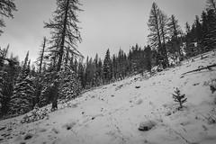Need more snow through talus (johnwporter) Tags: hiking scramble mountainclimbing mountaineering cascades centralcascades mountains nationalforest okanoganwenatcheenationalforest wenatcheenationalforest diamondhead pnw upperleftusa northwestisbest                atx116prodx tokinaaf1116mmf28 wideangle wideanglelens   blewettpass  tronsenmeadow