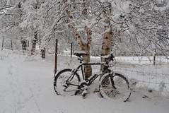 good bye, summer tracks! (Tjukka2) Tags: winterwonderland