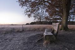 To cool down (aNNaj) Tags: dwingelderveld dwingeloo heide vorst winter landschap netherlands davidsplassen gevroren frozen