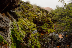 mossy desert-2015-07-20 11.46.32 (Brian Eagar Nature Photography) Tags: cloud rain lava utah moss sandstone fuji desert monsoons snowcanyon washingtoncounty fujixt1 fujixf27