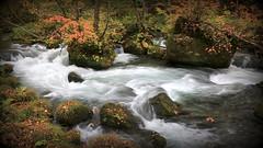 Oirase Mountain Stream in Japan - On Explore Oct 28 2015 (kyuen13) Tags: