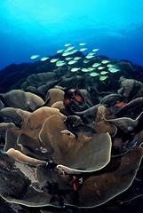 Palau - Reef Scene
