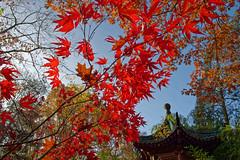 Herbst / Autumn (vb-bildermacher) Tags: autumn red sky color tree rot heaven colorfull laub herbst himmel dreams nrw teich duisburg blätter garten baum bunt farben ruhe ahorn farbenfroh japanischerahorn