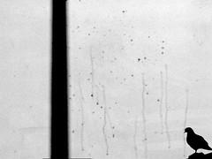 P3230189_edited-5 impression ! (gpaolini50) Tags: blackandwhite bw photography photo creative photographic explore photoaday bianconero emotive biancoenero composizione emozioni explora photographis explored esplora creattività phothograpia