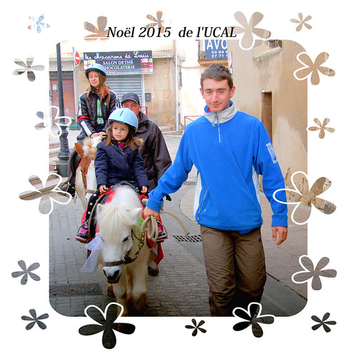 Manège & poneys (19)