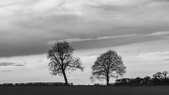 two trees (Redheadwondering) Tags: trees winter clouds landscape blackwhite sigma wiltshire ilforddelta400 baretrees yatesbury sigma50mmdgmacro sonya850