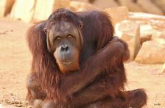 I need a HUG! (Amro Afifi) Tags: sad wildlife hug photooftheday amroafifi