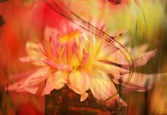 Fall Untamed II (Karen McQuilkin) Tags: trees icmfallcolors falluntamedii flower impression blur icm seasons summerfall