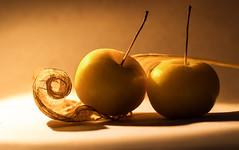 Zierpfel (blancobello) Tags: macro zierpfel blatt getrocknet gelb apples yellow 100mm