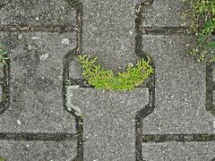 Smile! (onnola) Tags: berlin deutschland germany tempelhof tempelhoferfeld tempelhoferfreiheit flughafentempelhof lcheln lachen boden pflaster stein moos pflanze kraut smile stone weg path moss plant grn grau grey green gesicht face