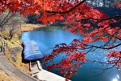,,,Goshiki-Numa,Japan (Vincent_Ting) Tags:  japan    railway maples autumn  bridge    ginkgotree bluesky  river  tadamiline tadamisen jr  aizuwakamatsustation      yamagatacastle  narugogorge gorge  narugohotspring    sendai miyagiprefecture    yamadera    cablecar                    goshikinuma vincentting