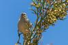 The sentinel (fabioresti) Tags: sentinel islasuasi titikaka perù 2016 lago lake canoneos80d 55250 bird