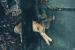 Cats Edition 8 - (7) (Robert Krstevski) Tags: robertkrstevskiblogspotcom robertkrstevski cat cats pet pets animal animals animallovers gato gatos    kotka popular cute catsedition8 edition 8 nikond3300 nikons2500 nikon macedonia blogspot kitty kitten kittens kitties cuteness