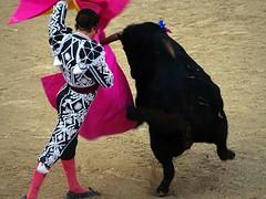Morante de la Puebla (aficion2012) Tags: morante de la puebla torero matador corrida bull bullfight toro toreau arles goyesca goyesque france francia 2016 capote capear capeando capa