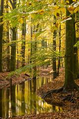Soft autumn reflection (Alex Verweij) Tags: autumn herfst kleur color canon 5d tree boom trees bomen water hierden nunspeet alex verweij beek wortels vertikaal blad bladeren