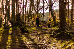 Loneliness Forest (esevelez) Tags: nature airelibre arboles atardecer bosque boy chica dog forest girl hiking loneliness magic magico man mujer naturaleza paseo people perro personas quiet senderismo soledad sunset tranquilidad trees trekking woman outdoor outdoors