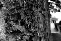 Wall (Leica M6) (stefankamert) Tags: stefan kamert mood bw baw sw black white schwarz weis street leica m6 m rangefinder mirrorless voigtlnder nokton ilford fp4 film analog scan epson v550 negative grain einfarbig outdoor noir monochrome noiretblanc blurred dof stefankamert blackandwhite blackwhite schwarzweis wall perspective textures structures leicam6