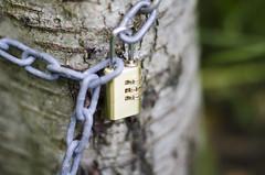 Locked tree (martinekuldvere) Tags: depth field depthoffield locked tree