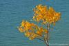 Color Tour ... wood and water (Ken Scott) Tags: leelanau michigan usa 2016 september fall autumn 45thparallel hdr kenscott kenscottphotography kenscottphotographycom freshwater greatlakes lakemichigan sbdnl sleepingbeardunenationallakeshore voted mostbeautifulplaceinamerica colortour fallcolors