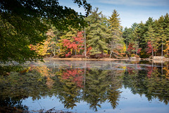 Symmetry (mraogr) Tags: fall autumn newengland boston andover merrimackvalley color foliage leafpeeping leaves leafpeepers trees fallcolors falllandscape lansdcape reflections reflection stillreflection mirror mirroredimage haroldparkerstateforest pond lake water treeline