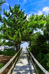 Pathway to Paradise (laurenspies) Tags: boardwalk beach cottonpatchhills bethany bethanybeach delaware de usa
