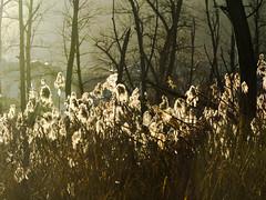 les sans abris fin novembre (christophebiget) Tags: eaux maraisdebsm plansdeauetlacs