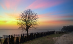 Tree. (augustynbatko) Tags: tree sky mist lake nature water landscape view sun outdoor