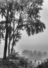 A Myth (nokkie1) Tags: eindhoven holland netherlands parc fog trees woman myth lines light black white monochrome contrast