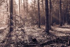 Herbstwald (Gofaster7608) Tags: greenery schein shine grass gras eicheln laubwald laubbaum nadelwald nadeln moos laub herbst fall autumn bltter leaves baum holz forest wood wald
