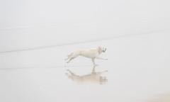 2983 (sul gm) Tags: niebla fog foggy mist misty playa beach autumn otoo fall white blanco dog perro pet animal run running movement motion movimiento sanlorenzo gijn xixn asturias asturies espaa spain labrador