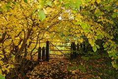 Autumn_08 (DepictingPhotos) Tags: autumn foliage