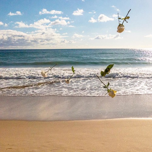 Flying roses at the beach, when this is not Romantic I don't know #love #roses #flyingroses #dream #unrealday #beach #portugal #algarve #beautifuldestinations #sun #summerend #fantastic #awesome #beautiful #sky #water #bluesea #travelblogger #travel #holi