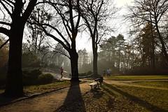 running in the park (JoannaRB2009) Tags: parkimksiciajzefaponiatowskiegowodzi park path tree trees light shadow nature bench mist fog haze autumn fall november 26112016 d lodz polska poland landscape