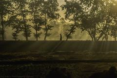 Winter Bangladesh (Topu Saha) Tags: people nature landscapes sunrise trees sunray morning winter sarishabari jamalpur bangladesh nikon walk green grass
