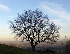 The oak on St Ann's Knoll at sunset (Kumukulanui) Tags: england oak tree worcestershire stannswell severnvalley malvern malvernhills malverns greatmalvern silhouette dusk sunset evening