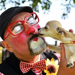 La grande gioia di avere un cane è quella di poter fare l'idiota davanti a lui: non soltanto non ti rimprovererà, ma anche lui farà lo stesso. (illyphoto) Tags: photoilariaprovenzi ziopasticcio clown cane leccare