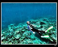 Dive In (petrangKUNEHO) Tags: thegreatbarrierreef orpheusisland queensland australia qld reef snorkel snorkeling downunder
