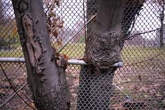 L1000420_p (thebiblioholic) Tags: setonpark riverdale bronx tenniscourt