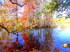 Reflection on the Duck Island Pass (dimaruss34) Tags: newyork brooklyn dmitriyfomenko image fall autumn sky foliage reflection prospectpark