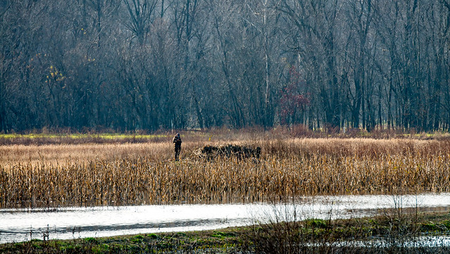 Stillwater Marsh - Monroe Lake - November 26, 2016Stillwater Marsh - Monroe Lake - November 26, 2016