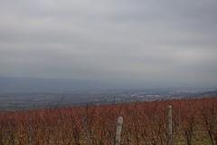 Johannisberger Türmchen - Blick ins Rheintal