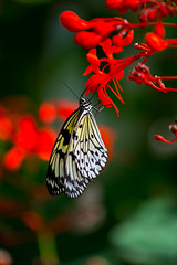 Butterfly (WestEndFoto) Tags: wildlifephotography natural fother agenre butterfly niagarafalls flickrwestendfoto dgeography ontario canada bsubject naturephotography flickr animal ca condoart livingroomoptions flickrwestendfotoep