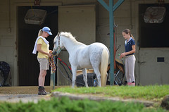 2015-08-02 (10) Horse Show - Black-Eyed Susan (JLeeFleenor) Tags: photos photography md blackeyedsusan uppermarlboro princegeorgesequestriancenter horseshow horsepeople horses thoroughbreds equine equestrian cheval cavalo cavallo cavall caballo pferd paard perd hevonen hest hestur cal kon konj beygir capall ceffyl cuddy yarraman faras alogo soos kuda uma pfeerd koin حصان кон 马 häst άλογο סוס घोड़ा 馬 koń лошадь maryland