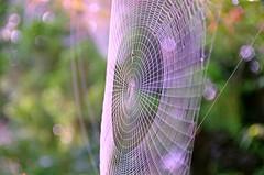 spinning art (Far East Man) Tags: goldcollection quantumentanglement simplysuperb pentaxart smcpda18135mmf3556edalifdcwr