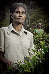 IMG_8667 - Tea Pickers (Stuart Butler / Oceansurf) Tags: tourism portraits asia tea ella srilanka hillcountry teafactory teapickers feb2014
