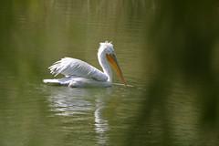 Walking on the lake (bbic) Tags: light white lake reflections september alb bbic